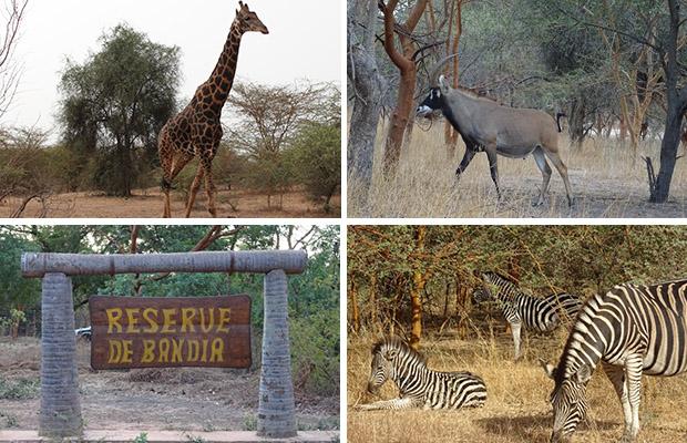 Les plus beaux endroits du Sénégal